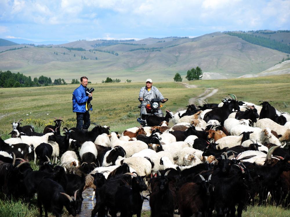 der gute Hirte und Schaf